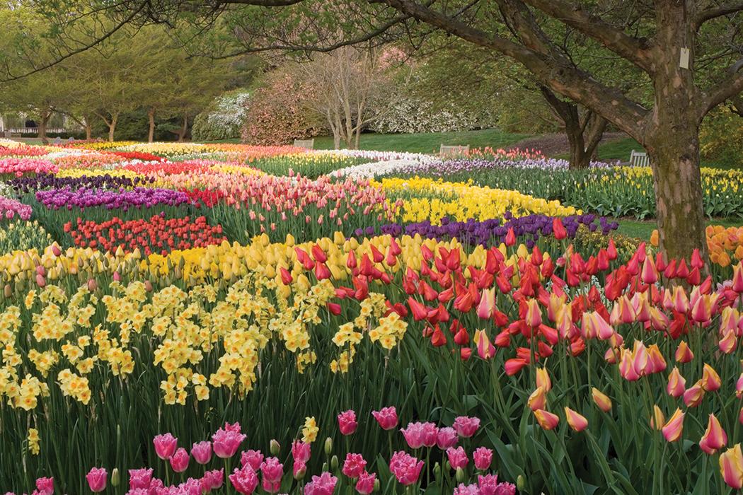 Longwood Gardens Spring