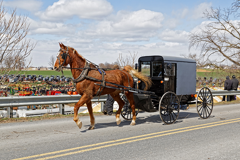 Amish Buggy leaving Lancaster County Mud Sale